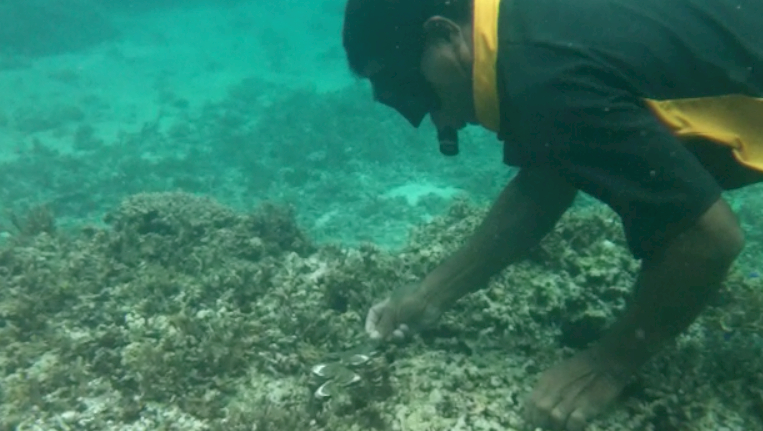 Giant clam measurement Islander Island Spirit Responsible travel Fiji