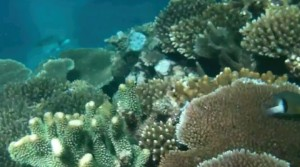 Healthy coral, tabu area