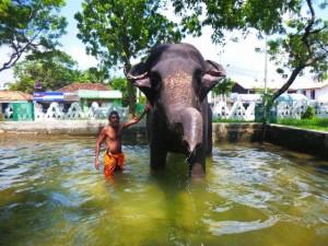 Island Spirit Sri Lanka Eco Holiday elephant safari