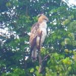 Sri Lanka, Island Spirit, birdlife