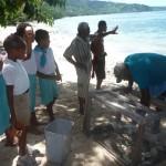 Clams and cucumbers in Fiji key in averting further coral calamities