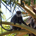 Sri Lanka, Island Spirit, monkey