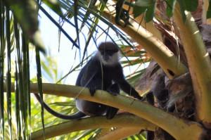 Sri Lanka, Island Spirit, monkey