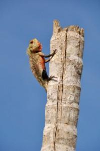 Sri Lanka, Island Spirit, Wildlife