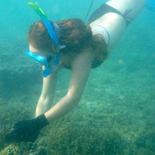 Island Spirit Responsible travel fiji coral gardening. Mermaiding