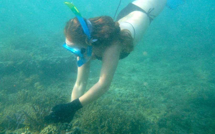 Island Spirit Responsible travel fiji coral gardening. Mermaiding