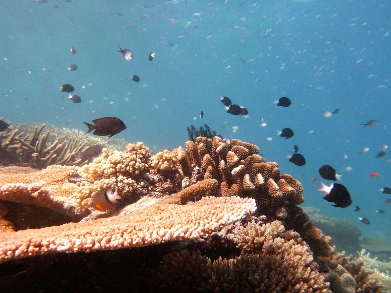 Coral gardening Island Spirit Fiji