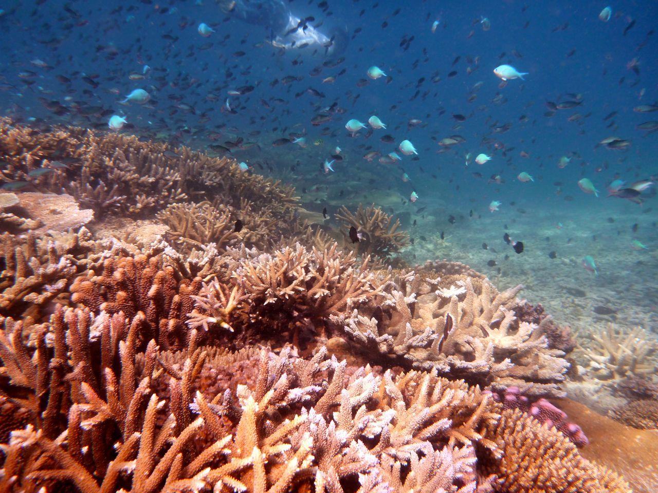 Island Spirit Responsible travel fiji coral gardening