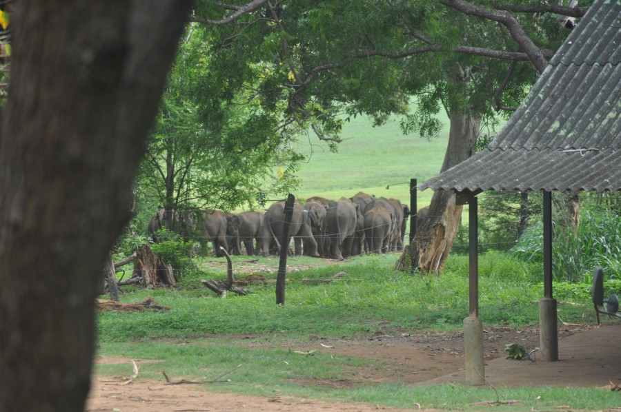 elephant-transit-home-island-spirit-sri-lanka-14