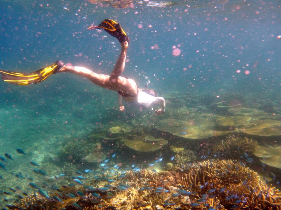 Snorkelling Island Spirit Fiji with Endangered species