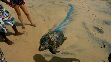 climate change and polluted sea affecting and killing marine life in Sri Lanka