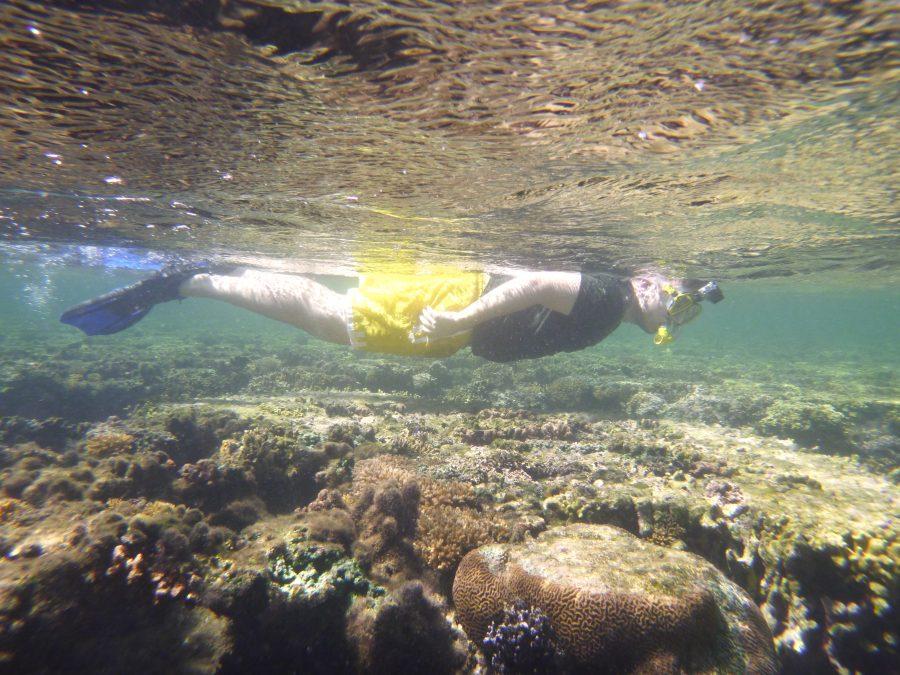 May Coral Gardening May Island Spirit Fiji