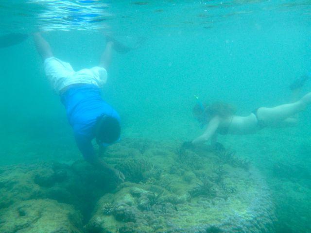 Island Spirit Fiji Coral gardening