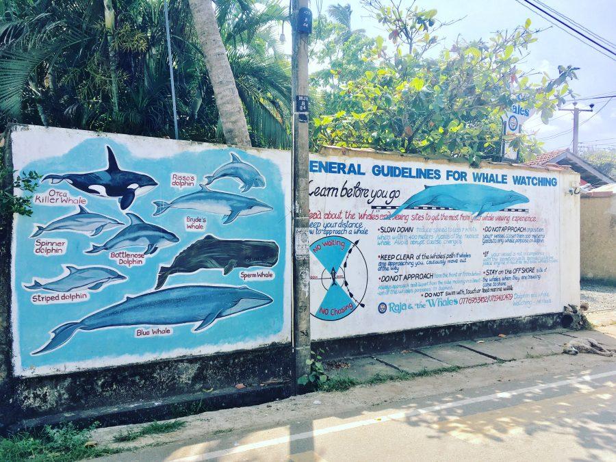 Whales Island Spirit Sri Lanka