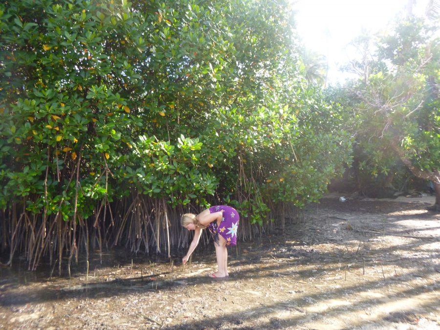 July mangrove planting Island Spirit.3