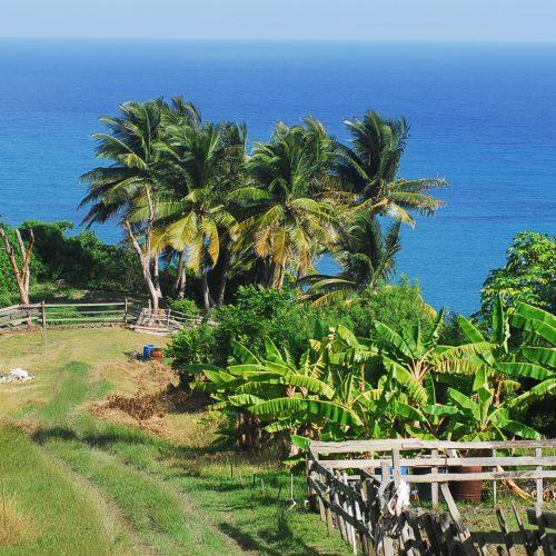 Barbados Island Spirit Landscape