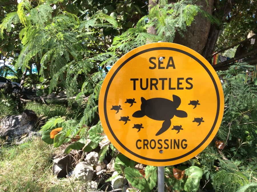 Barbados Island Spirit turtles