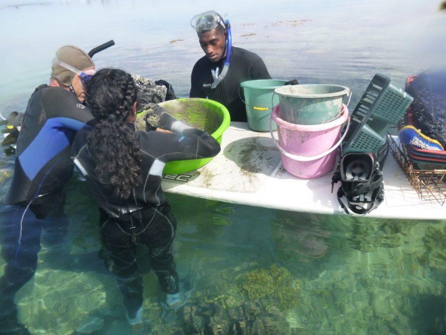June coral gardening trip 2017.119