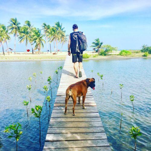 Baby mangroves Island Spirit Kalpitiya Sri Lanka