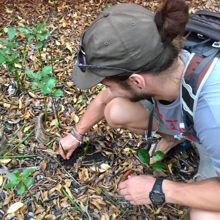 Mangrove planting island spirit sri lanka