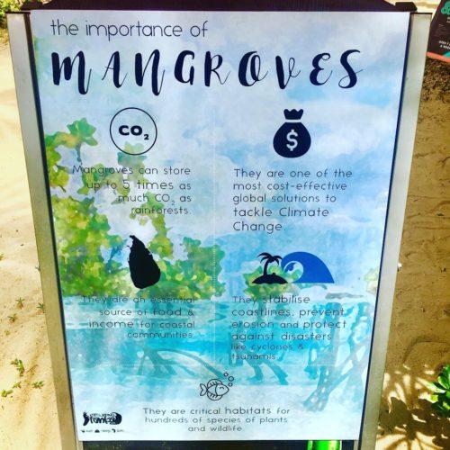 Kalpitiya mangroves Sri Lanka