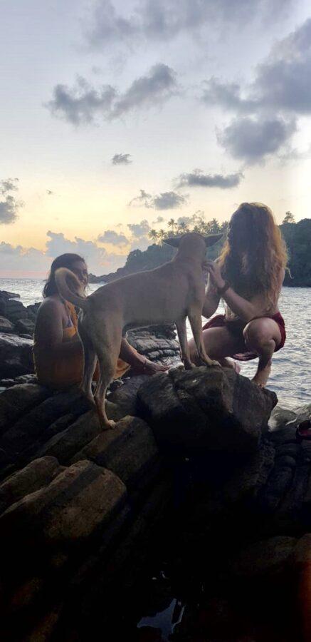 Dogs Sunset Hiriketiya Sri Lanka
