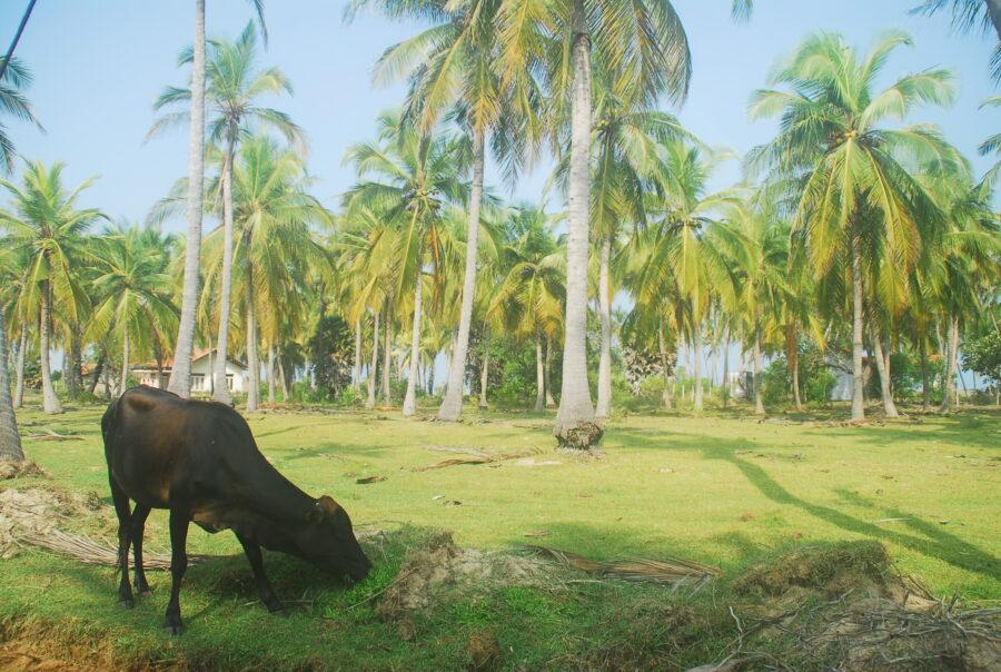 Cycling Kalpitiya Sri Lanka