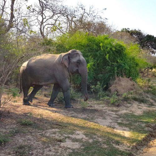 Kumana National Park, Sri Lanka